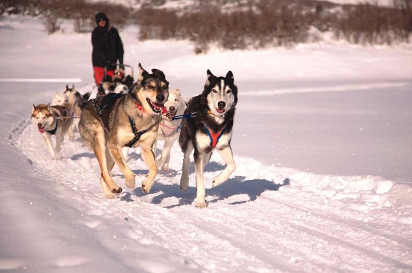 Utah's All Seasons Adventures dog sledding trip